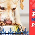 Premium dog food - made in the USA!